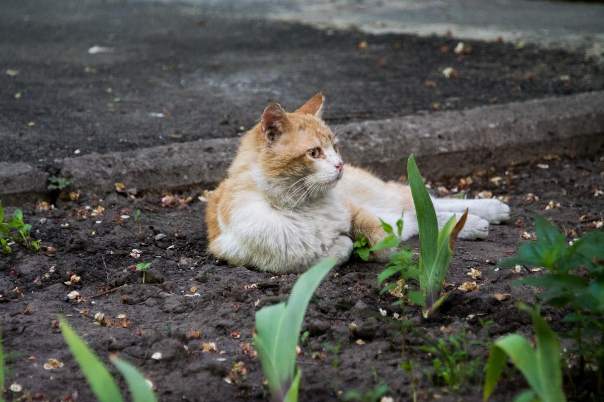 За последние 2 недели жильцы дома 1/2 на улице Митрополита Андрея Шептицкого нашли 6 кошачьих трупов.