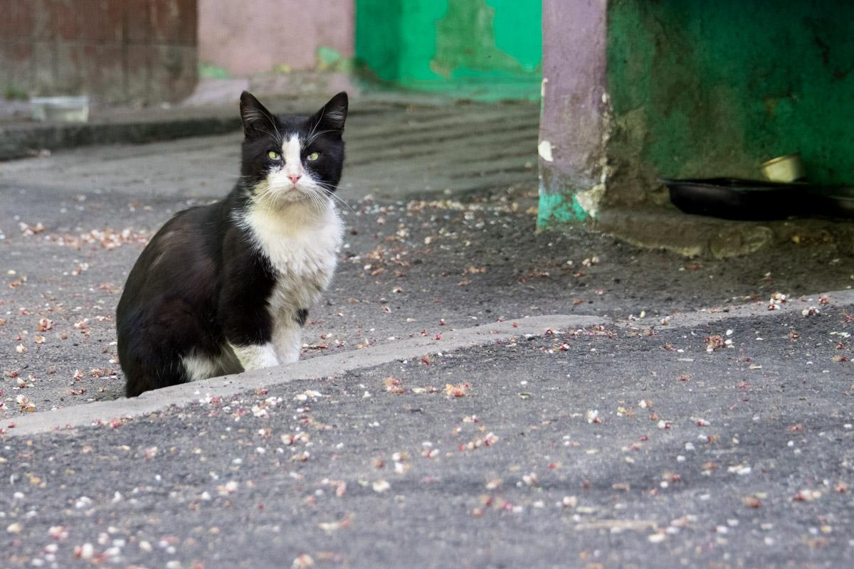 В подвалах дома живут более десятка кошек