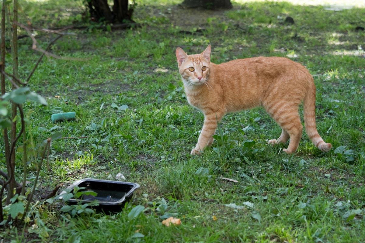 У котов всегда есть вода и еда