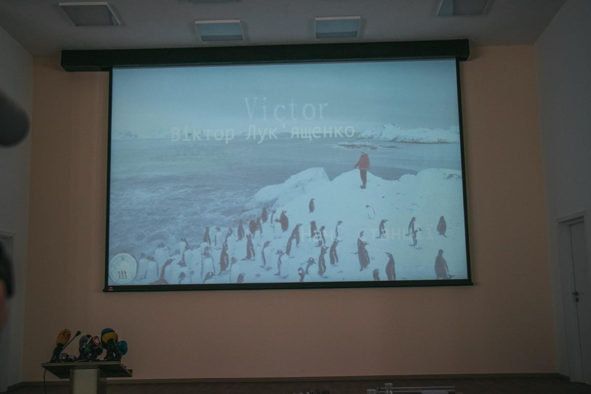 По словам ученых, пингвины, моржи и морские котики абсолютно не боятся людей