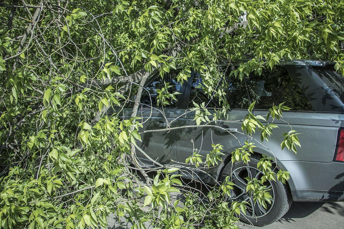 В Киеве на Бульварно-Кудрявской дерево упало на Range Rover