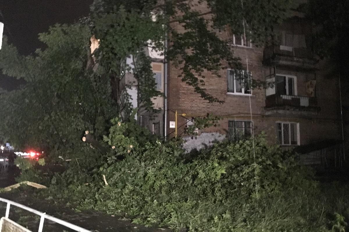 На улице Голосеевской дерево убило женщину