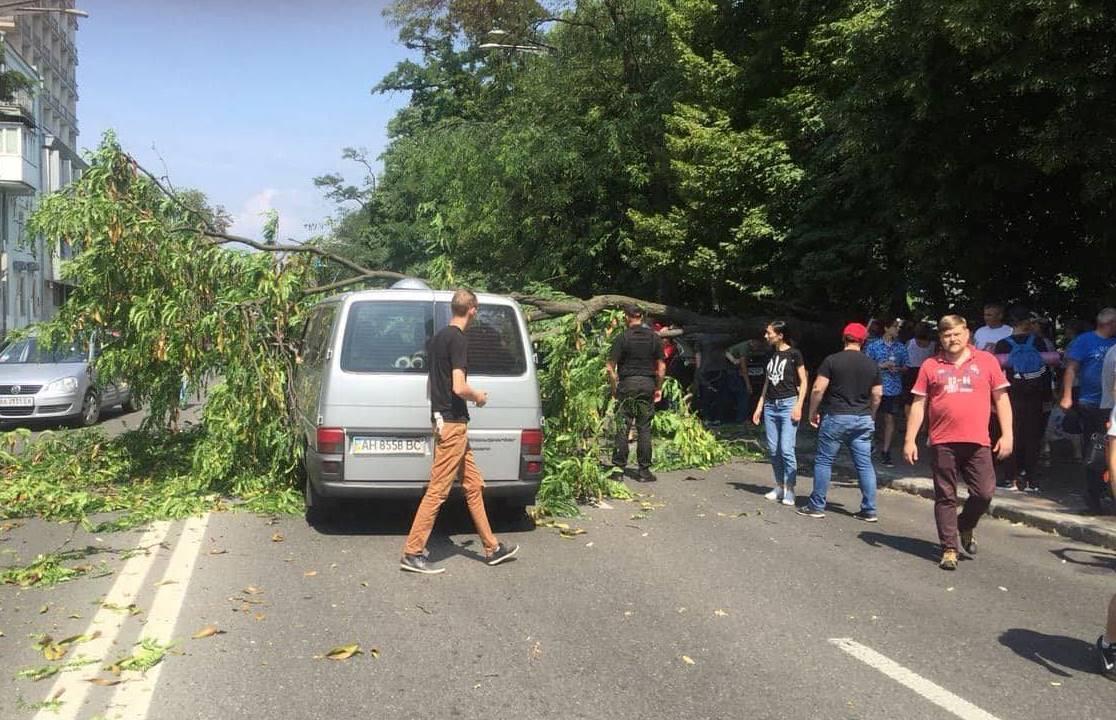 На улице Грушевского в центре Киева на проезжую часть упало большое дерево. Фото очевидцев