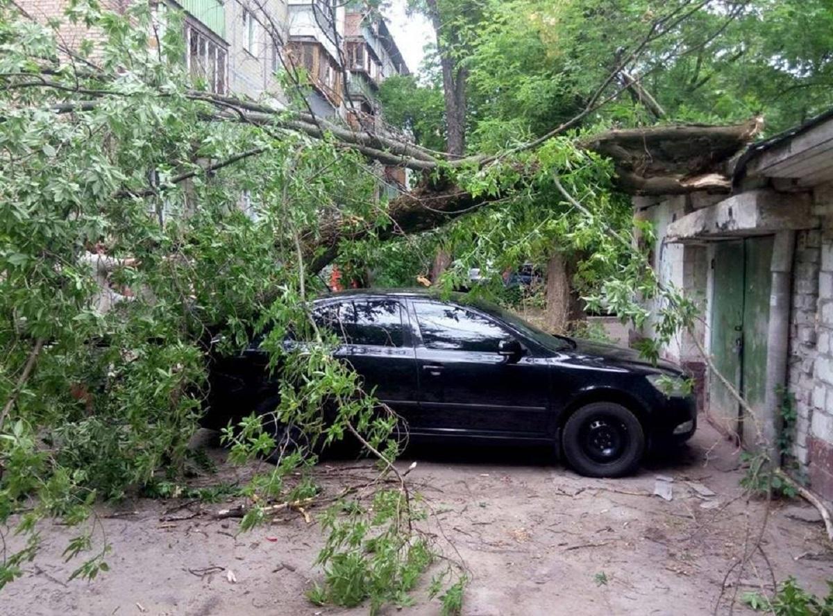 На Николая Василенко, 14а дерево упало на Škoda Fabia