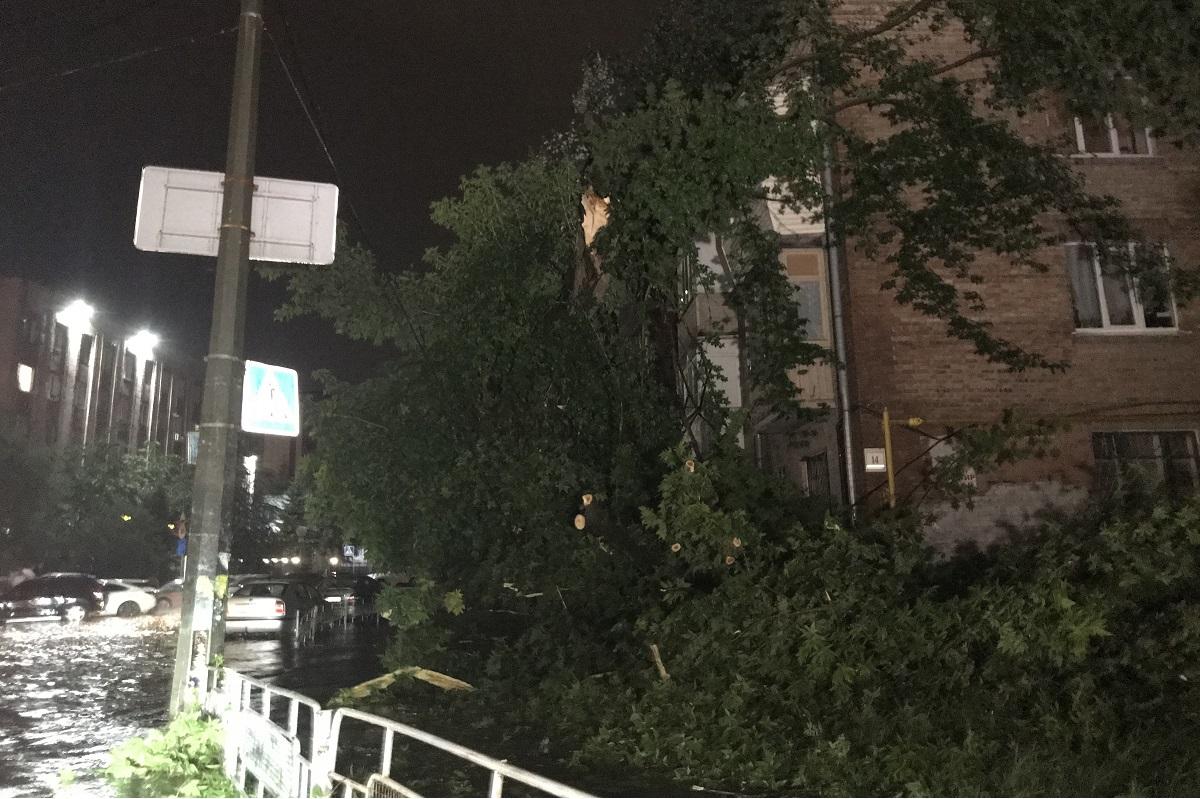 Во время падения дерево повредило линию электропередач, поэтому жители дома №14 остались без света