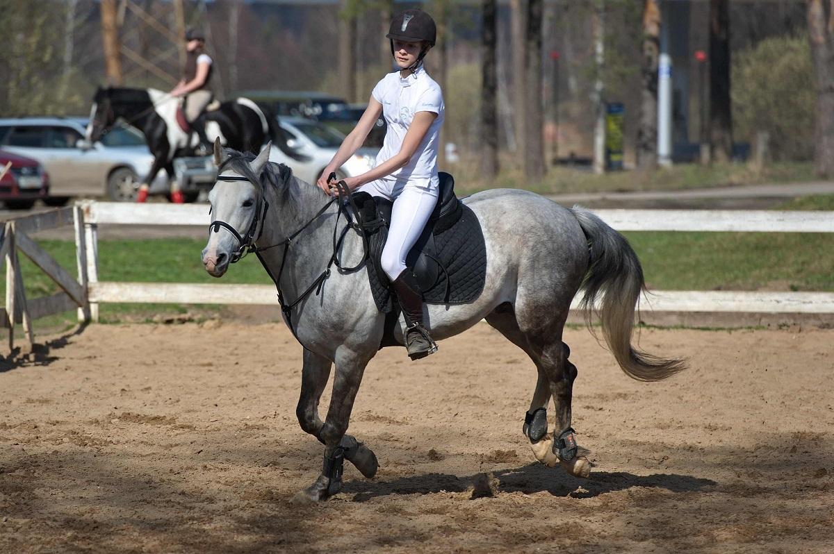 """Школа верховой езды """"Аргамак» уже более 20 лет обучает киевлян верховой езде"""