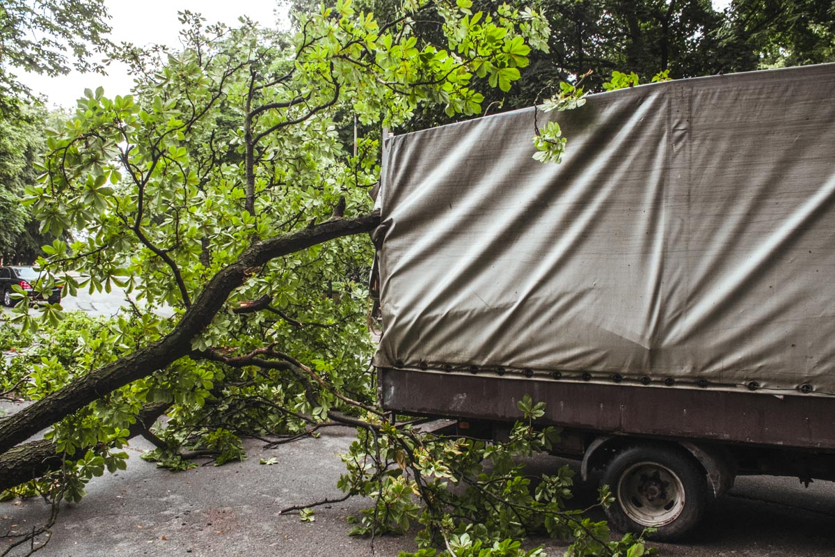В парке КПИ дерево упало на «Газель»