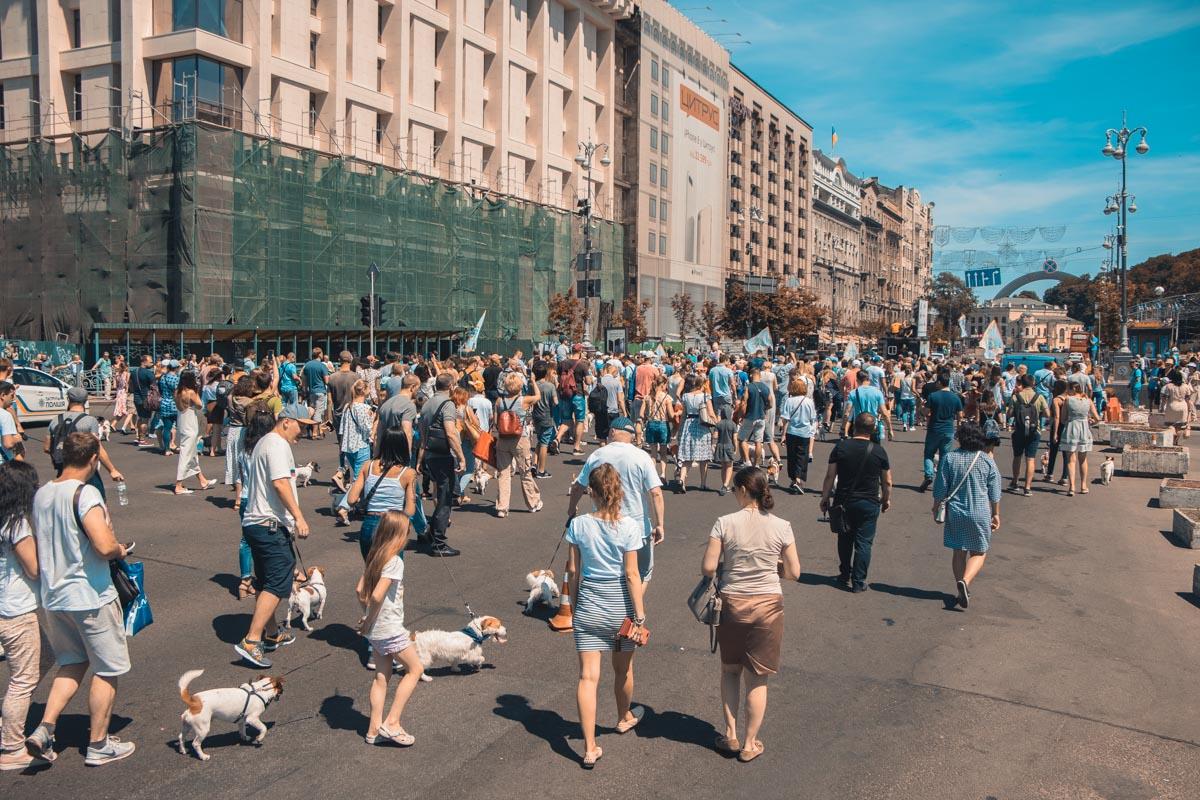10 июня в центре Киева, на Крещатике, стартовал парад четверолапых породы джек-рассел и парсон терьер
