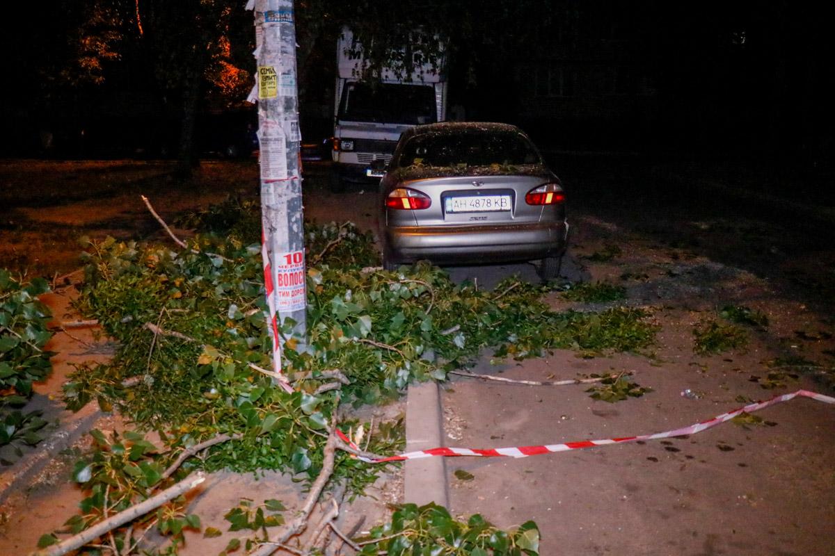 На улице Жолудева во дворе жилого дома с дерева упали ветки