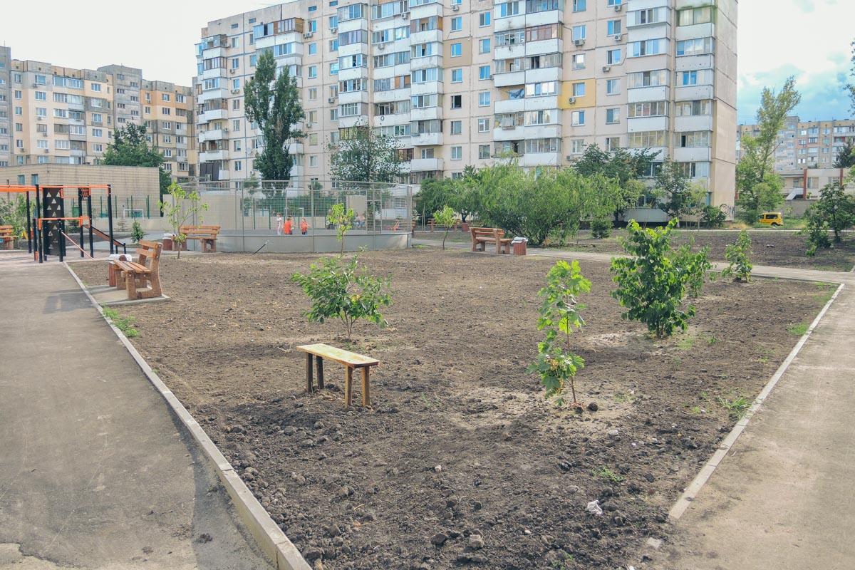На территории посадили деревья