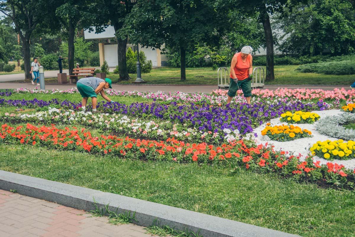 Коммунальщики озеленяют территорию