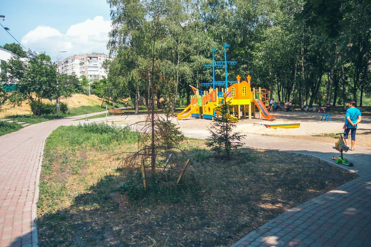 Борьба за жизнь маленькой ели на фоне детской площадки