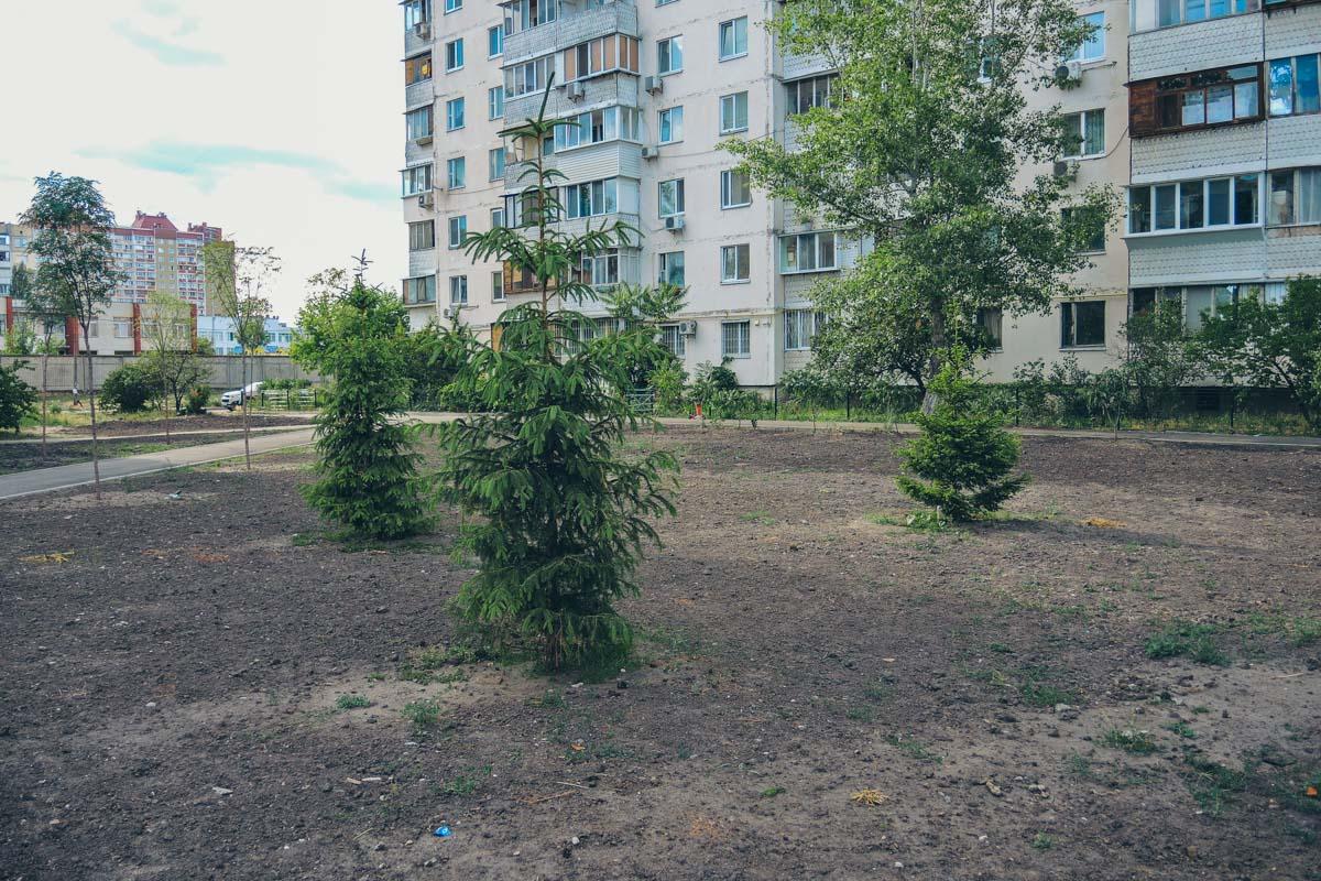 Подготовили грунт под газон