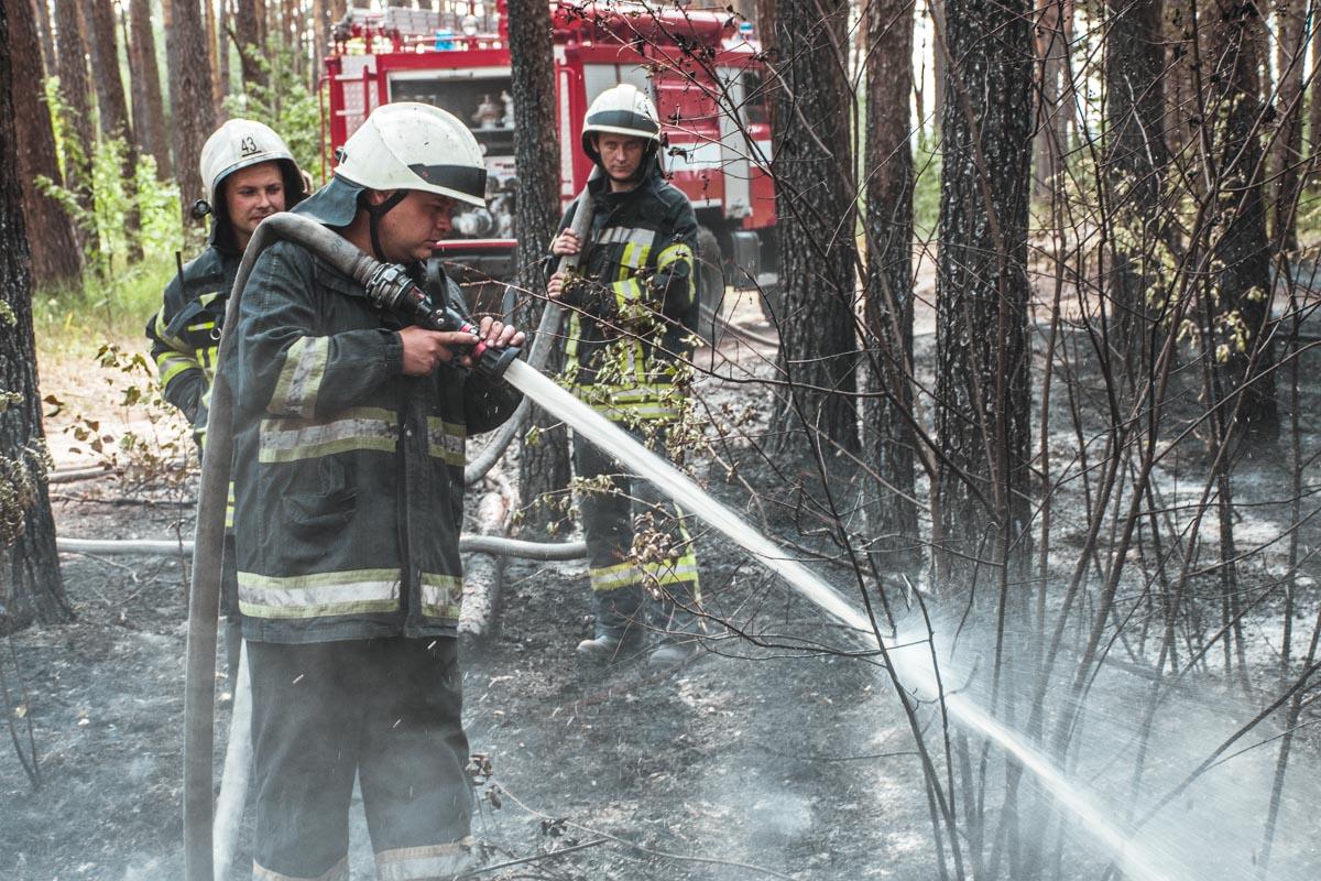 Тушить горящие насаждения приехали 2 подразделения ГСЧС