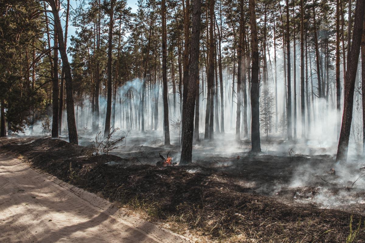 По словам охранника лесного хозяйства, он считает это поджогом - сухую лесную подстилку подожгли подростки