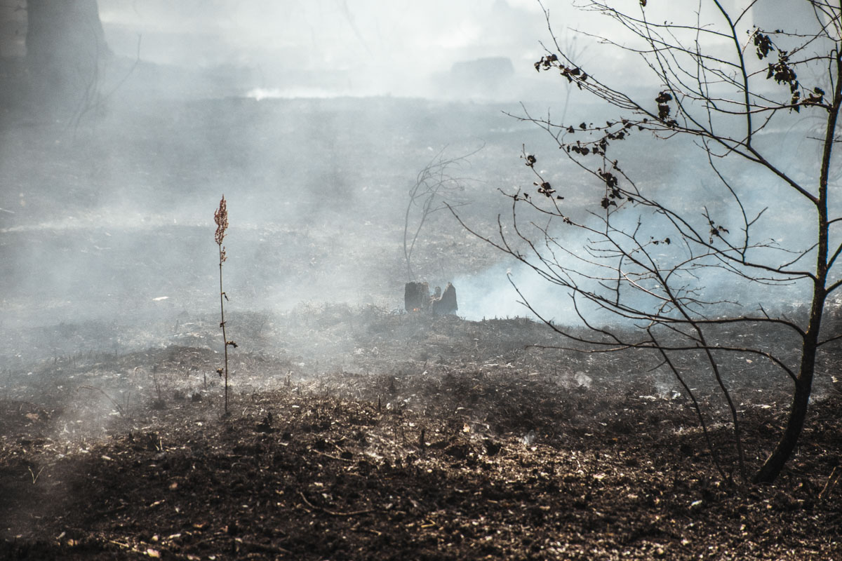 Так как продолжительное время не было дождей, горит около метра сухой лесной подстилки