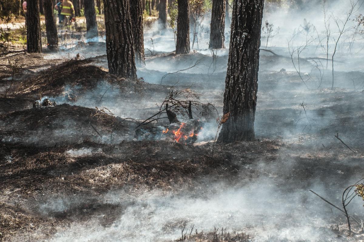 Огонь охватил площадь около 3 гектаров