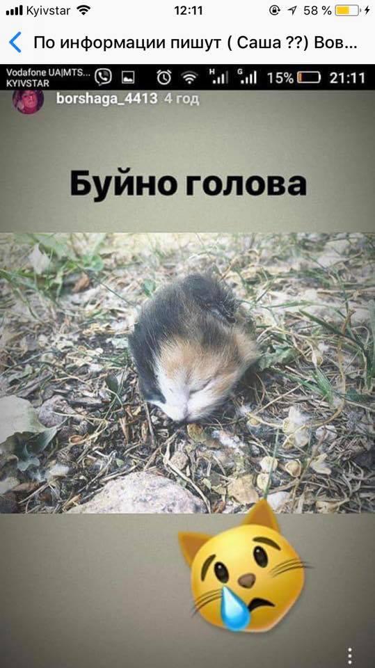 Скандальная картинка в сторис Александра Вовненко