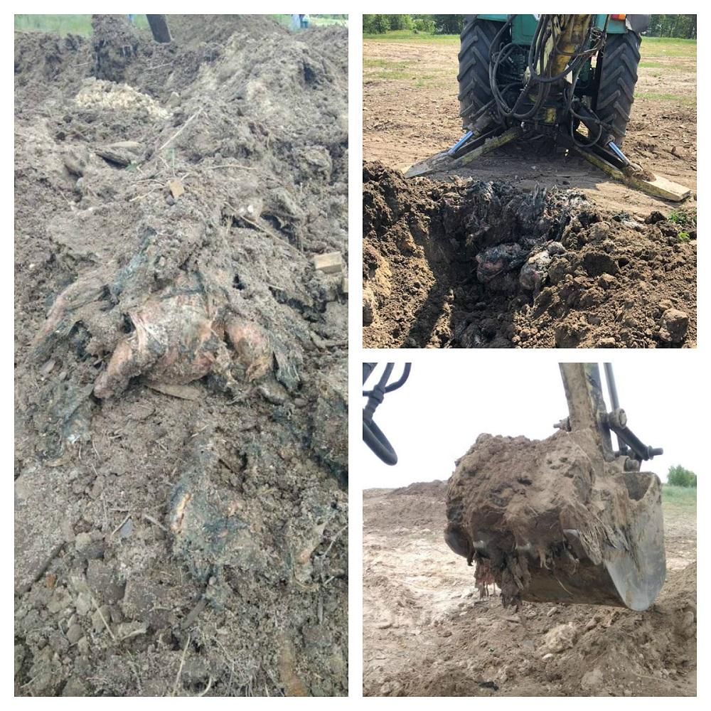 Птичий могильник в Киевской области. Фото: ГПУ