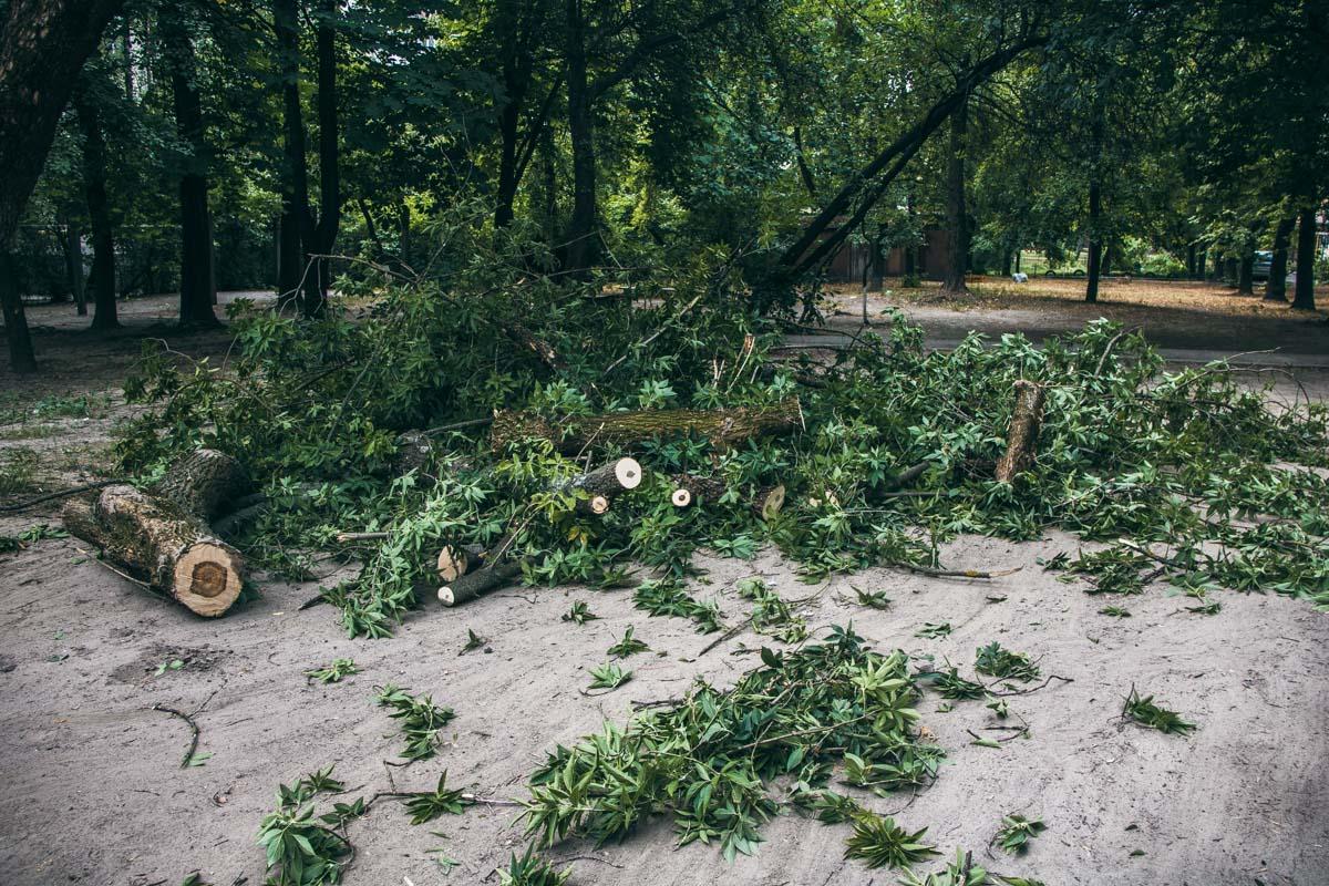 Владелец поврежденной машины рассказывает, что дерево уже давно было аварийным