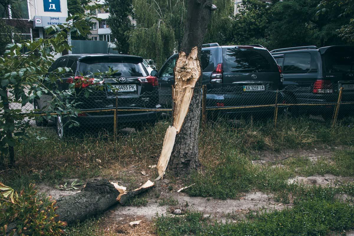 По этому же адресу, буквально через дорогу, упало еще одно дерево