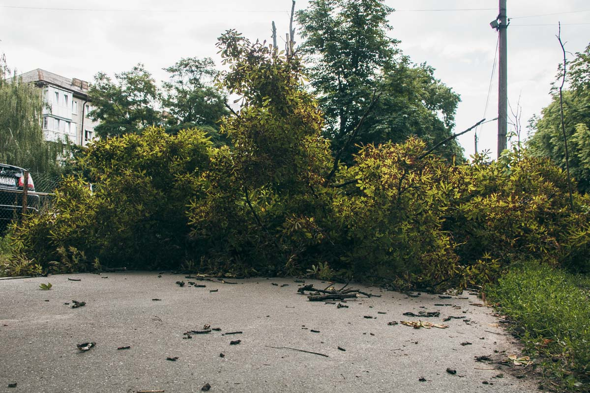 """Уставшее"" дерево перекрыло тротуар"