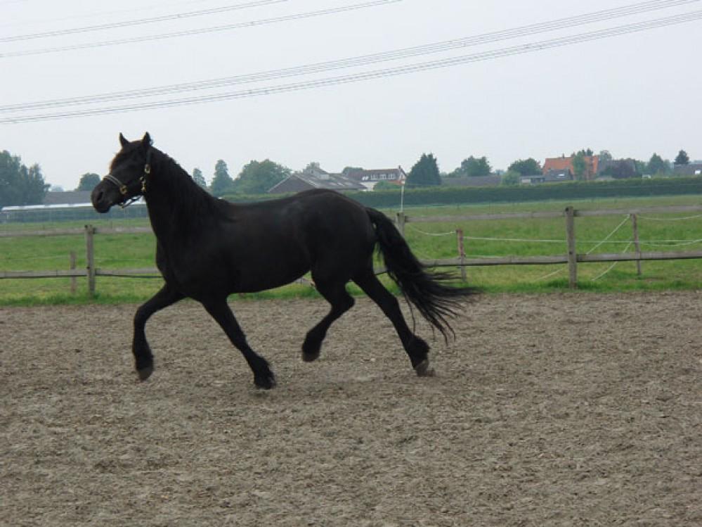 Конно-прогулочная база предлагает не только покататься на лошадях, но и приобрести понравившегося жеребца