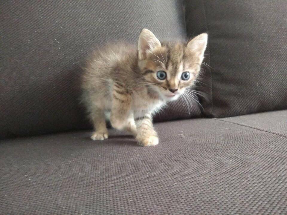 Малыш Микки ищет теплый и уютный дом