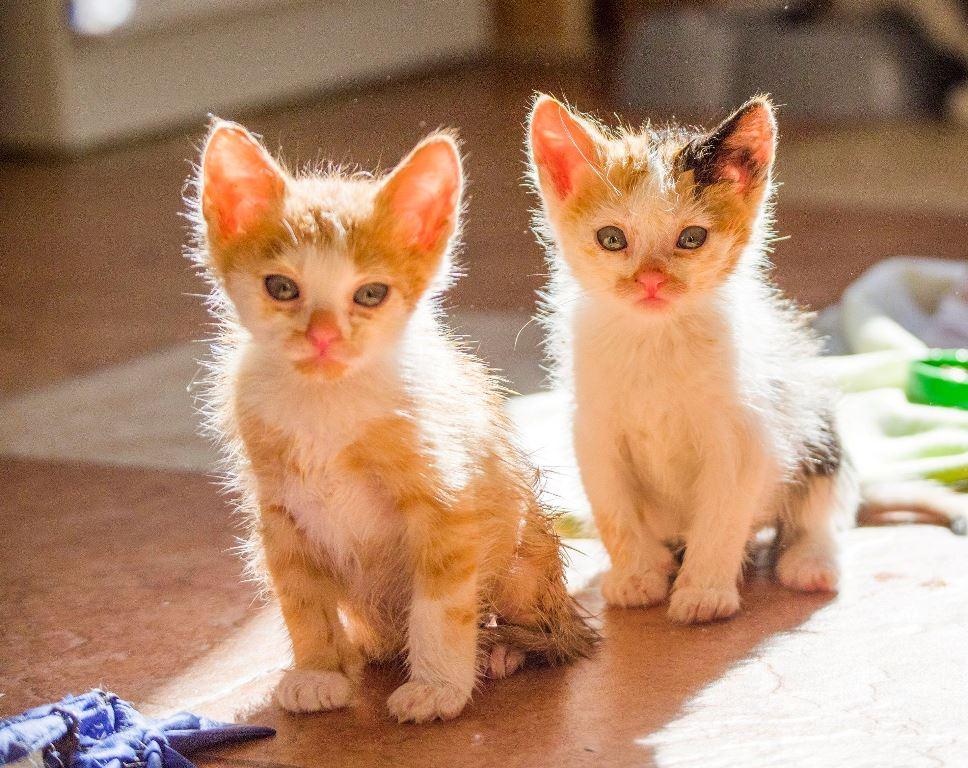 Котятки-солнечные лучики хотят тепла и любви