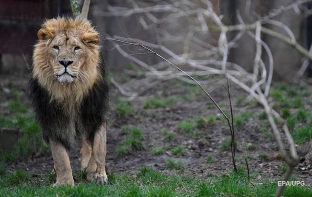Опасные хищники сбежали из зоопарка в Германии