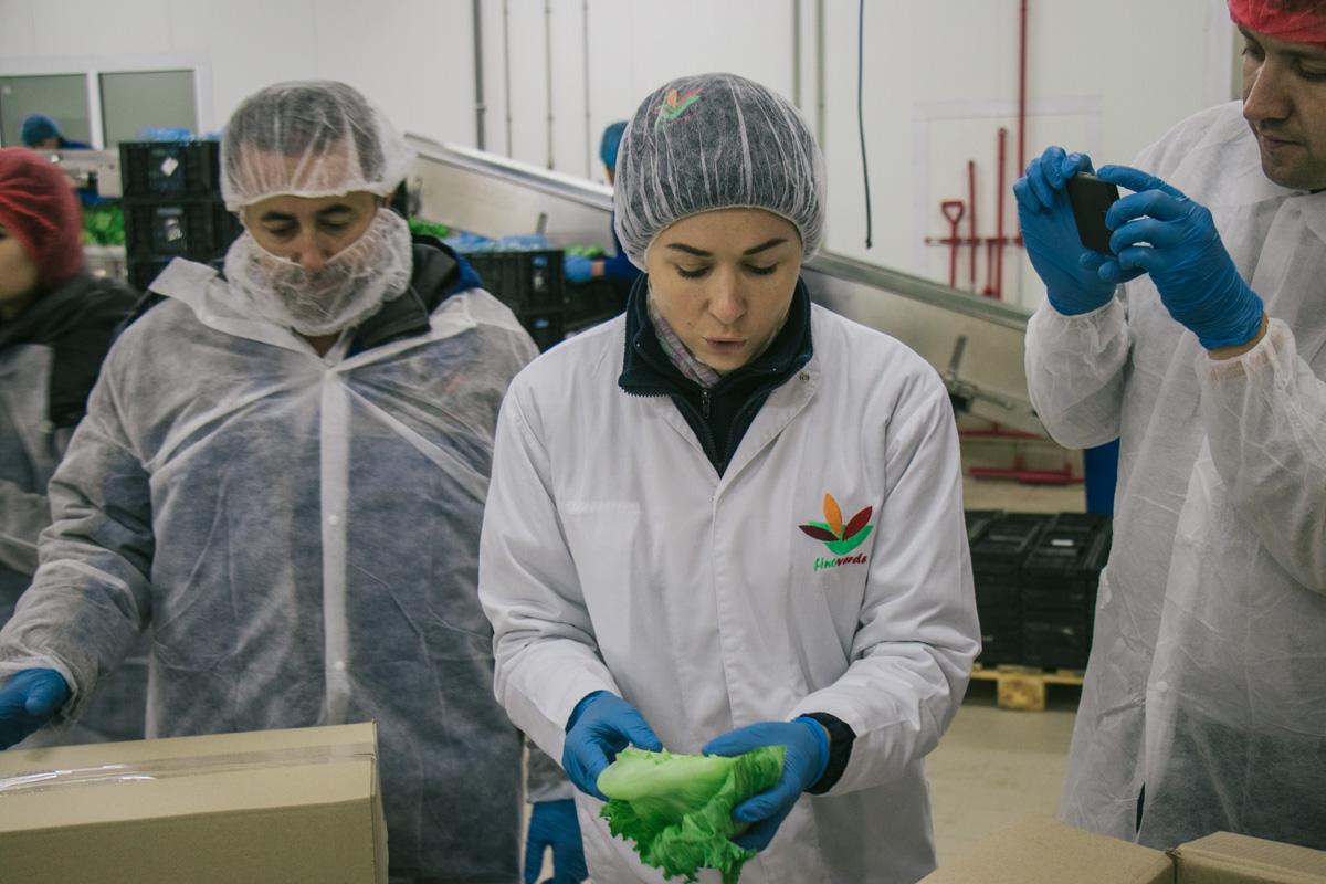 В цехах, где изготовляют салат установлена низкая температура – 2-3 градуса. Это подходящая среда для хранения и обработки листов салата