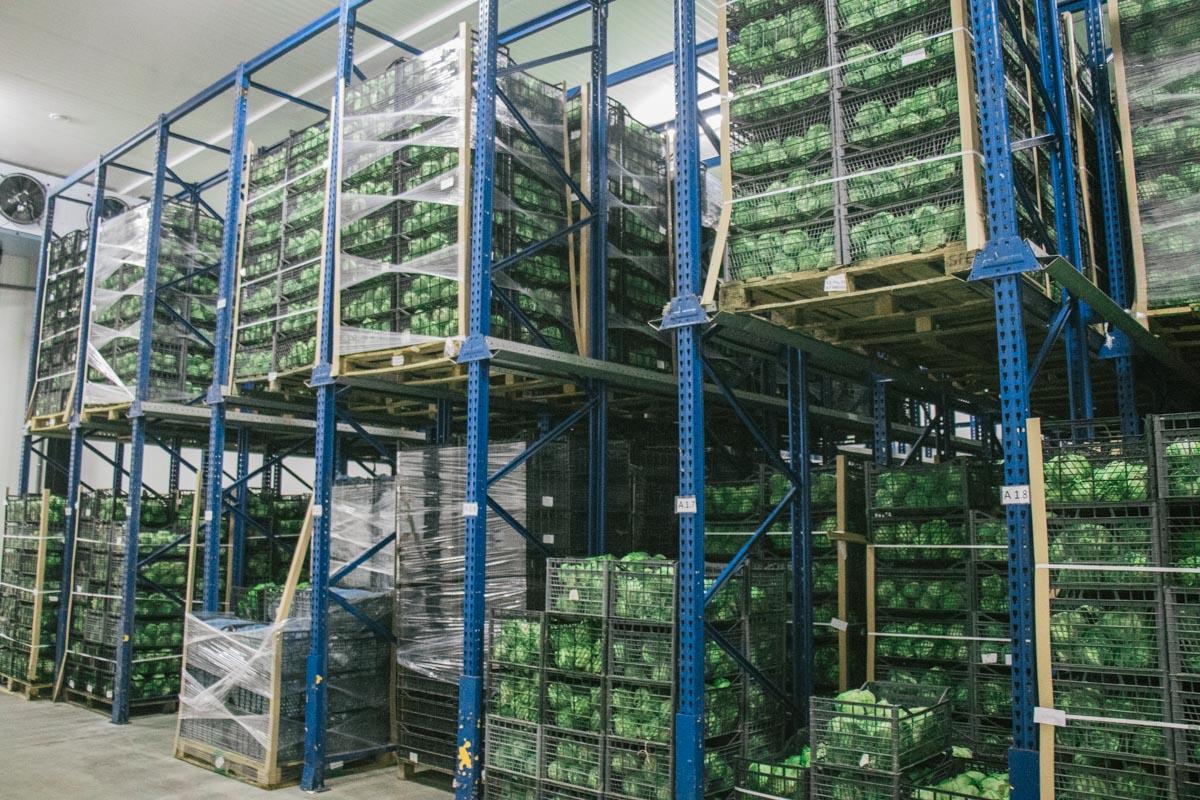 После сбора урожая салат направляют на фабрику возле села Макаров в Киевской области