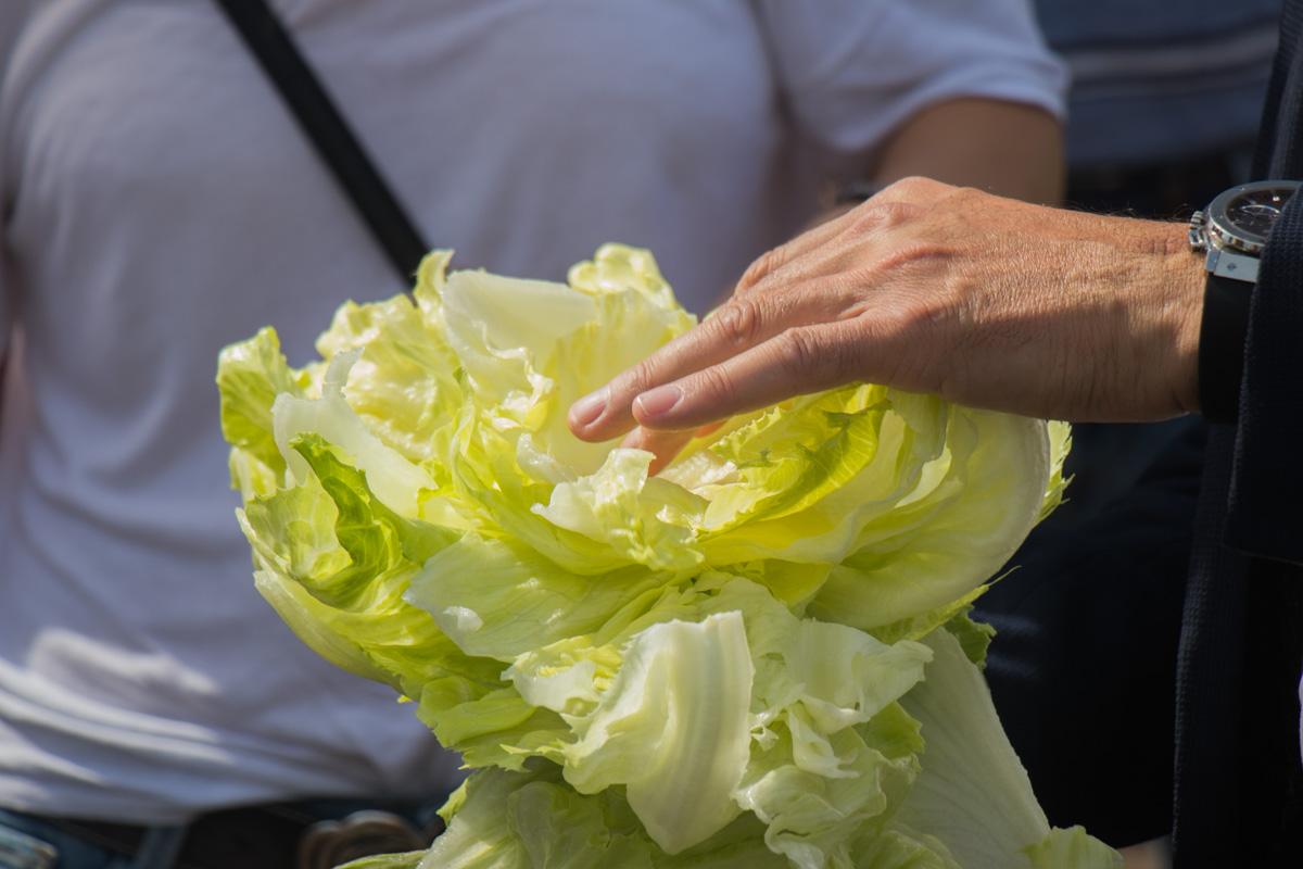 Сезон сбора урожая продолжается с апреля по ноябрь