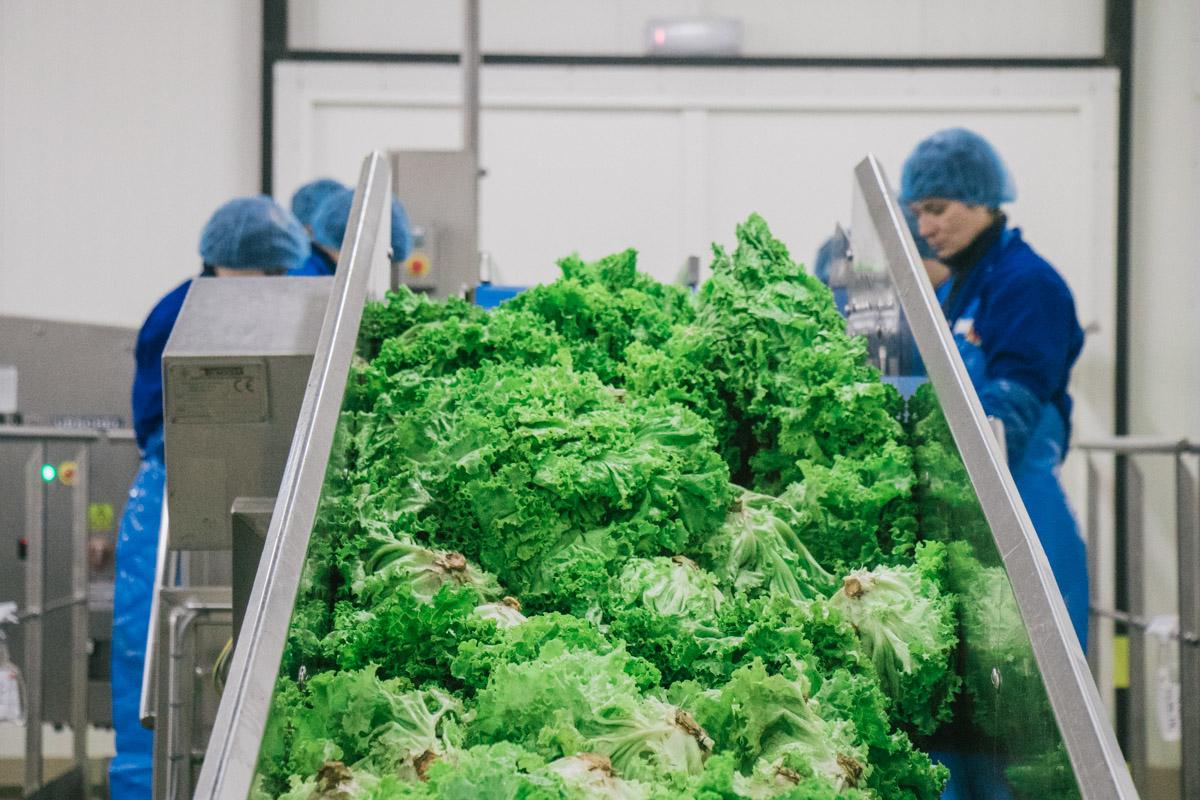 На фабрике плоды обрабатывают, нарезают и фасуют
