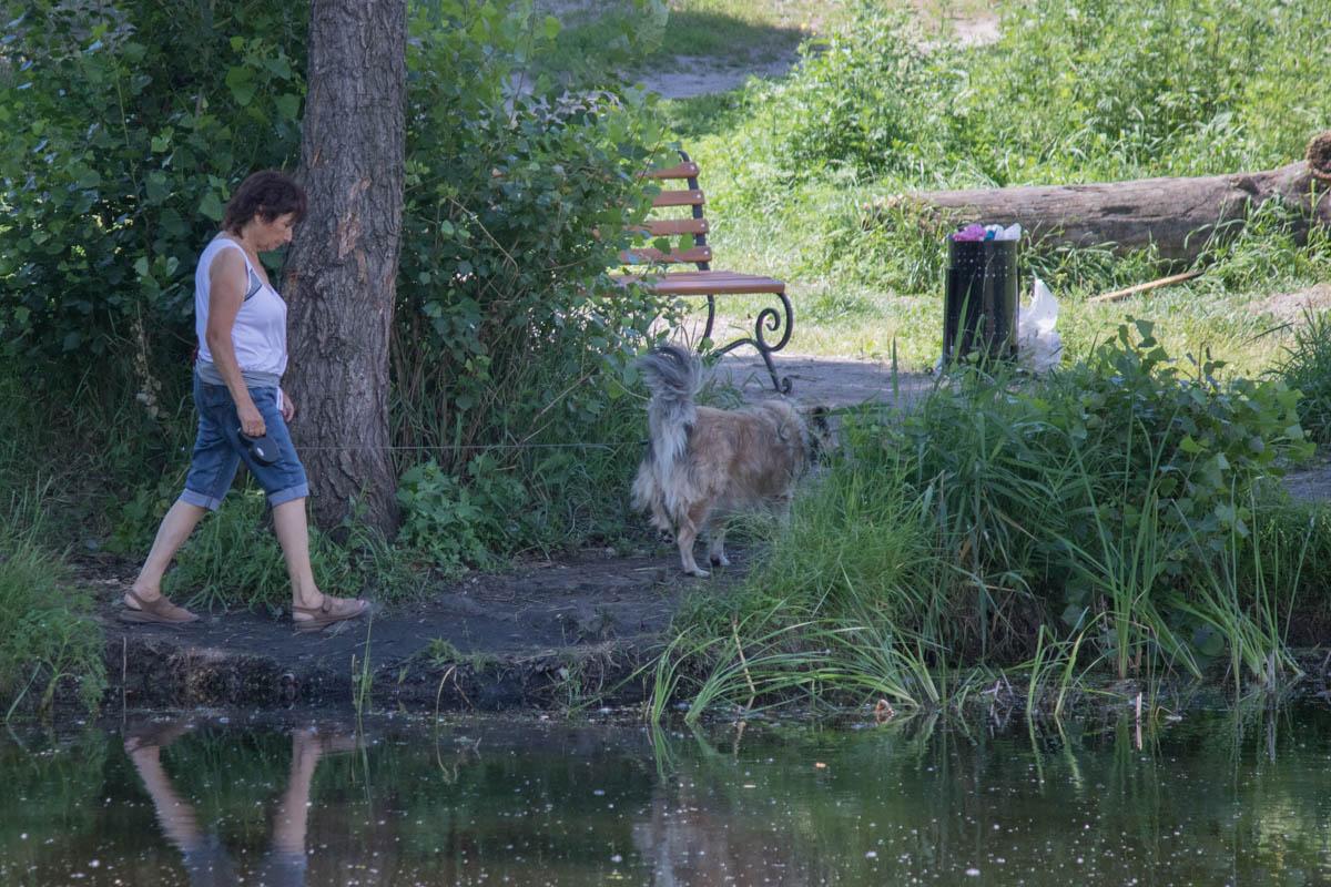 Почему бы не выгулять здесь пса