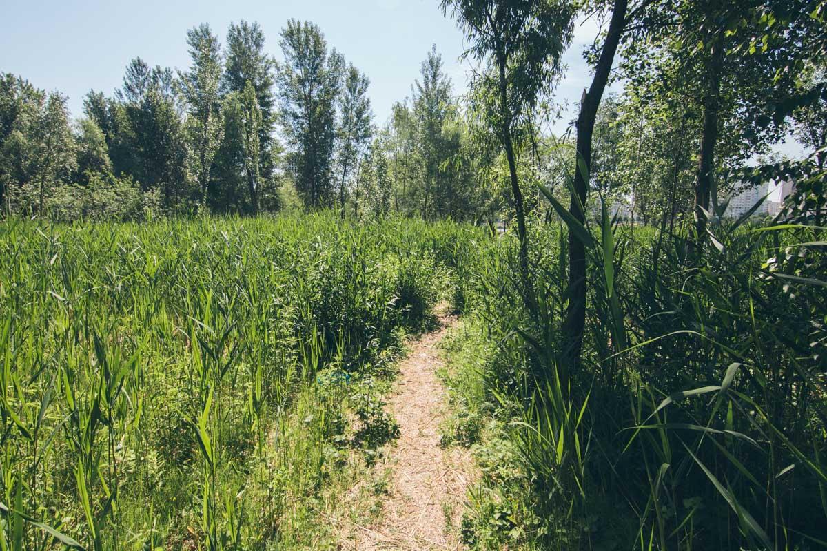 А вот и тропы, проложенные местными для удобства сокращения пути
