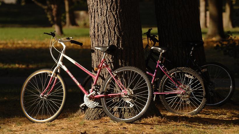 Всегда весело, полезно и захватывающе покататься на велосипеде
