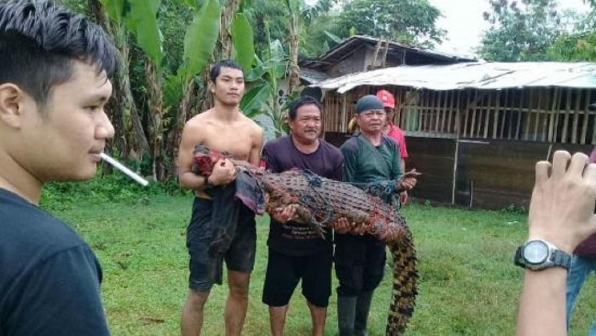 В Индонезии убили 292 крокодила, чтобы отомстить за смерть друга