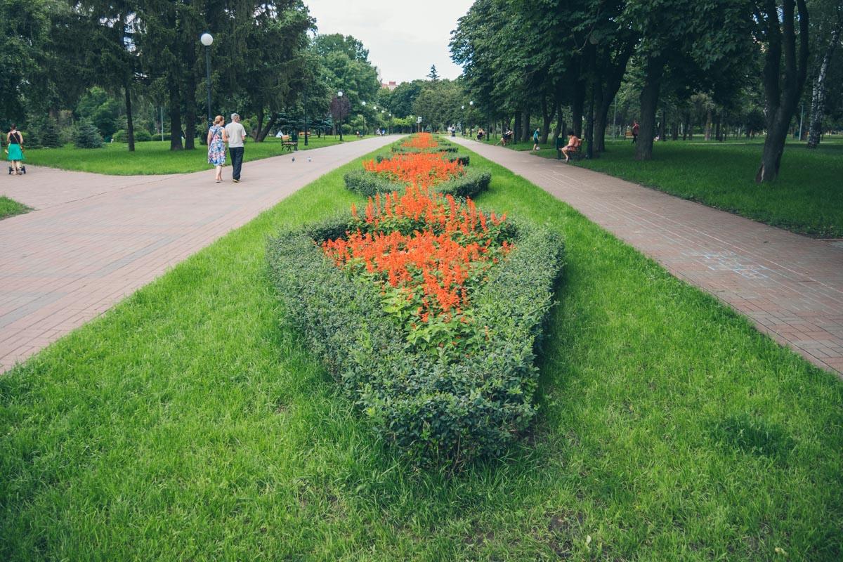 Зеленая травка и высажены цветы