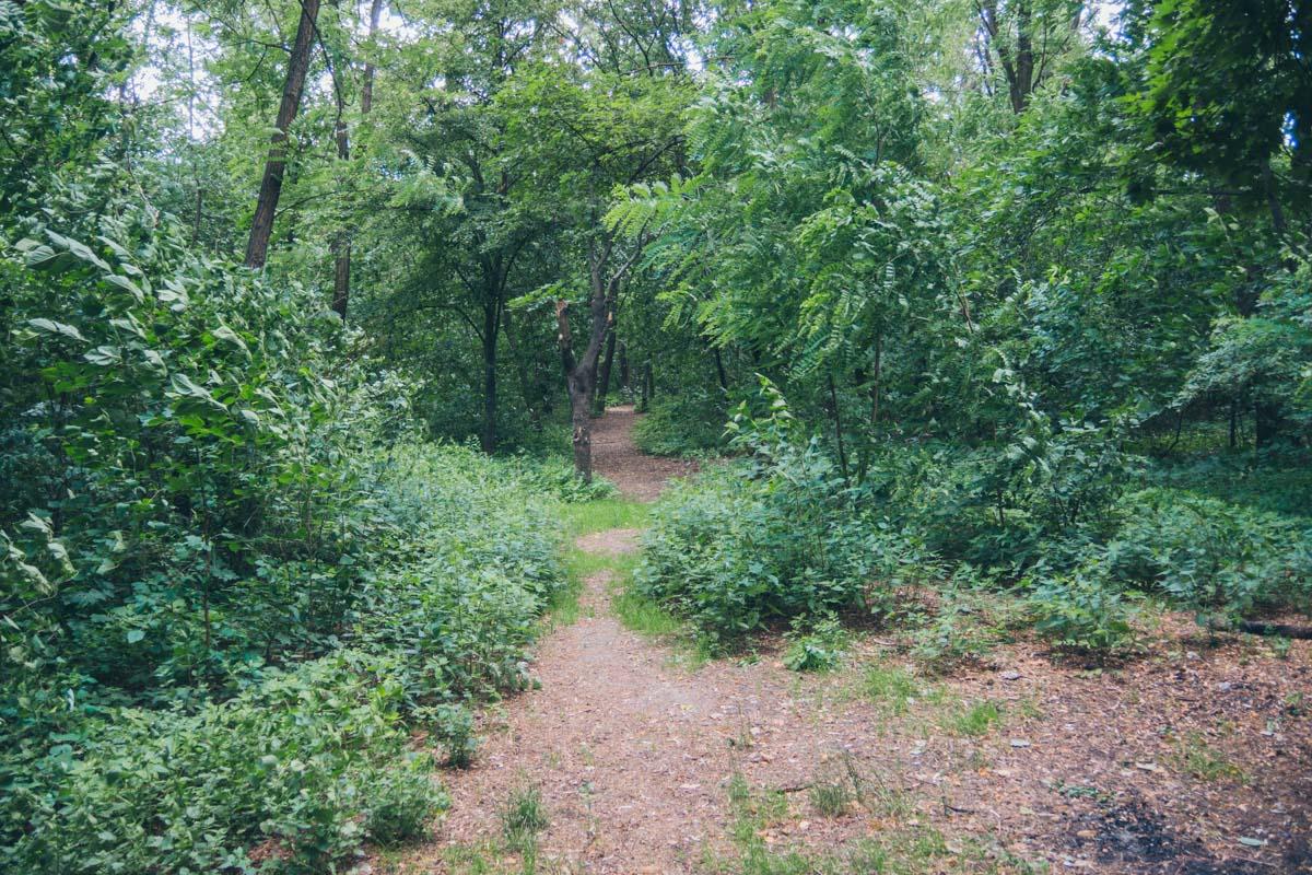 И даже похож на небольшой лес