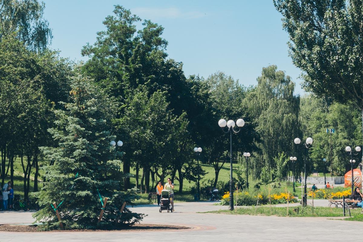 Вдоль аллеи высажены молодые деревья