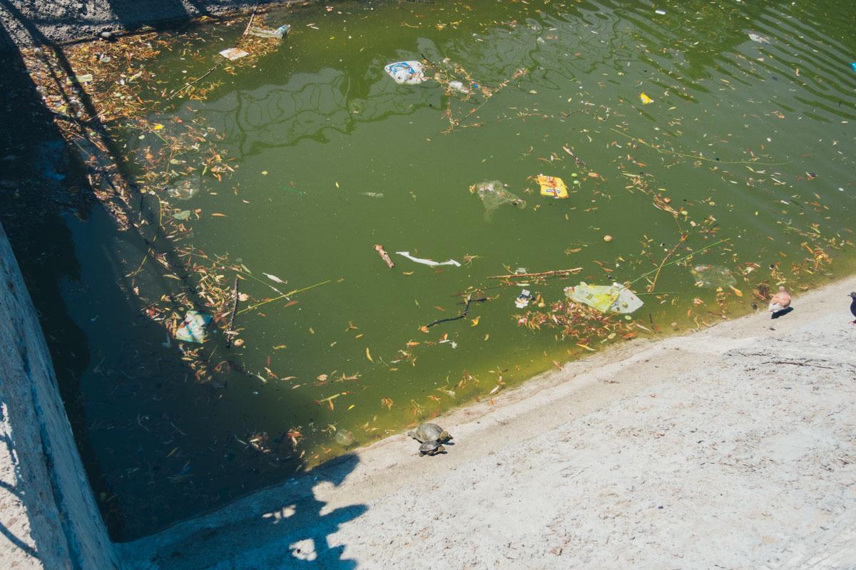 Черепашья семья живет в мусоре