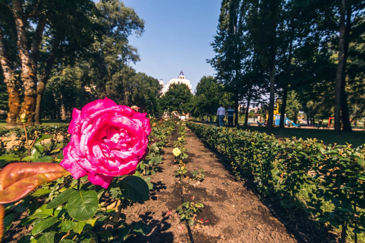 Клумба с розами радует глаз
