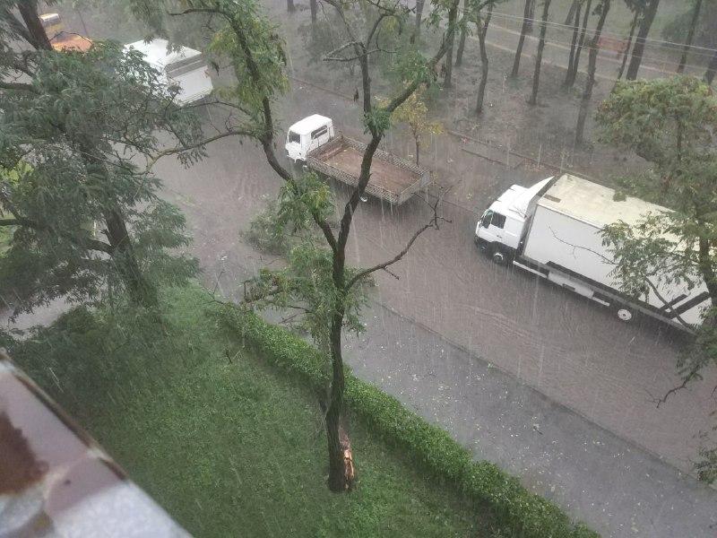 На улице Гонты дерево упало на дорогу