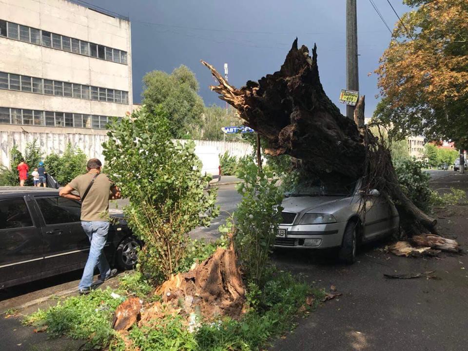 Дерево свалилось на машину на улице Выборгская