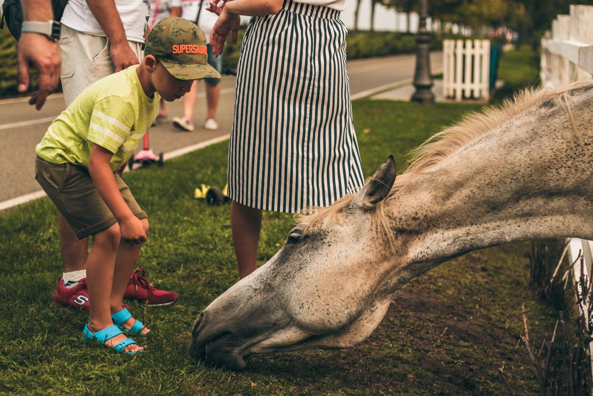 Лошадки заряжают позитивом и приятными эмоциями