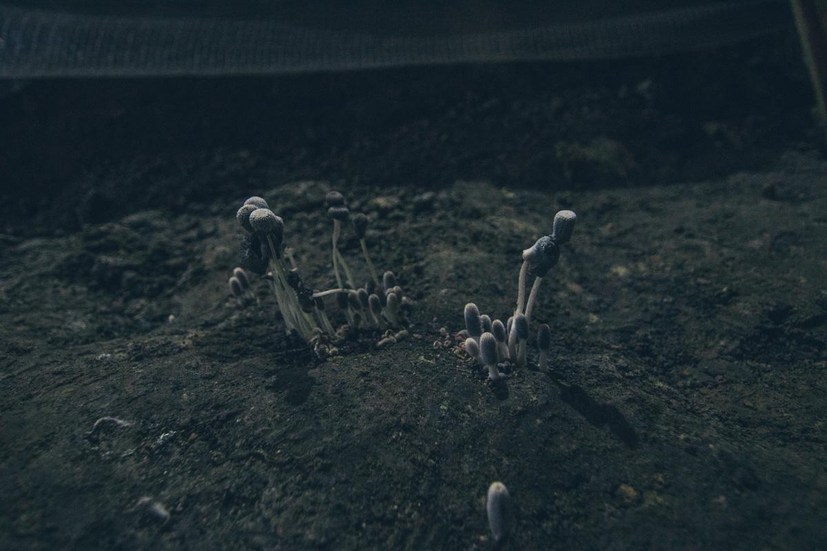Ученые объяснили, что наличие грибов в этой местности - плохой знак. Это знак неблагоприятной среды для построения сооружений