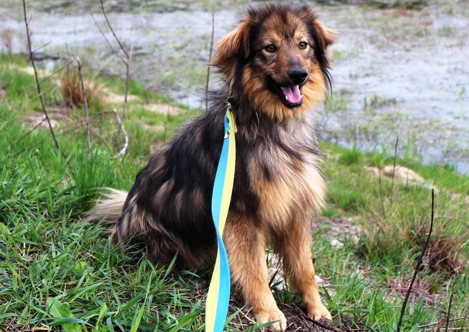 Нежный и ласковый пес Леон ищет дом