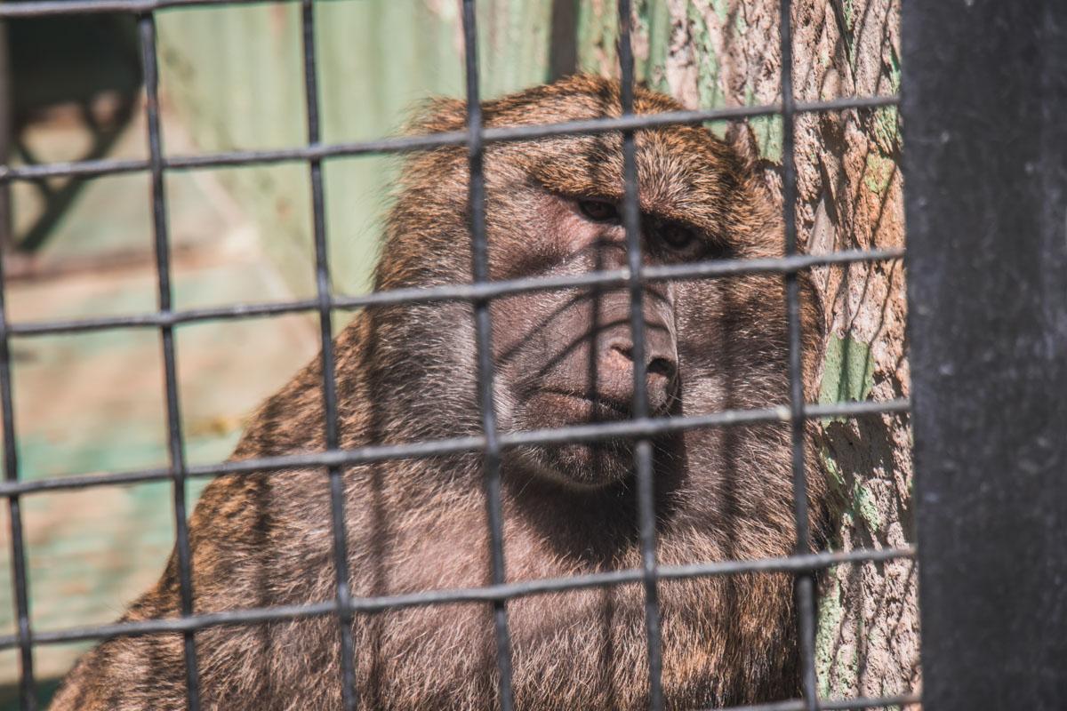 Обитатели зоопарка с нетерпением ждут завершения реконструкции