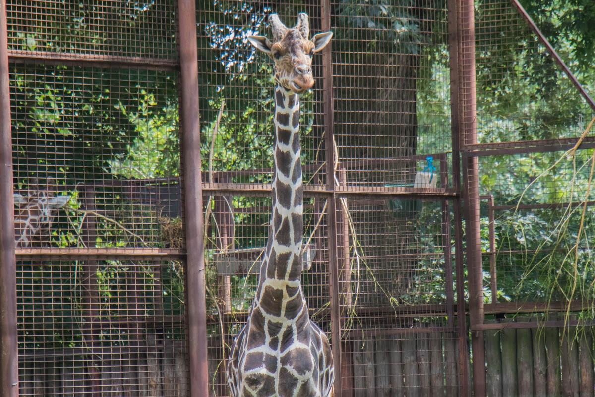 Поэтому обитатели зоопарка продолжали жить привычной жизнью